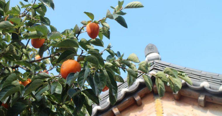 全州|하늘애 Skylove Hanok 天空愛 |這一夜入住傳統韓屋,拜訪鄉下奶奶家